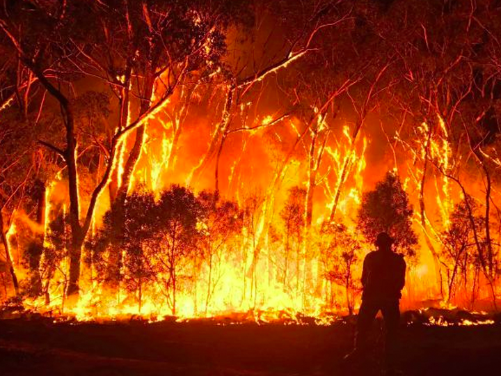 Bushfire affected producers